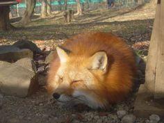 https://twitter.com/handai_fox