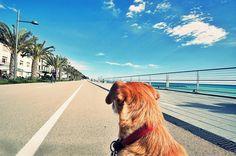 Sulla ciclabile puoi andarci anche con il cane... #Liguria #ciclabile #bike