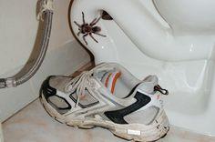 Les tuer ? Tout de même pas. Nous ne sommes pas des sauvages, même si nous avons peur. Voici 9 astuces naturelles pour faire fuir les araignées de la maison. Découvrez l'astuce ici : http://www.comment-economiser.fr/araignees-dehors-maison.html?utm_content=bufferd2a6d&utm_medium=social&utm_source=pinterest.com&utm_campaign=buffer