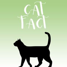 😻#GuessWhat; Cats have about 130,000 hairs per square inch! (20,155 hairs per square centimetre).