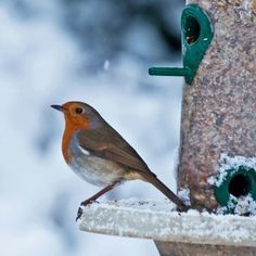 Christmas Robin   Robins in the U.K. are petite lovely birds....NOT like their American thrush cousins!
