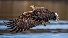 Magnificent Bird Photography by Luigi Rotondaro Eagle Eye, Bald Eagle, Luigi, White Tailed Eagle, Bird Wings, Best B, Birds Of Prey, Eagles, Art Photography