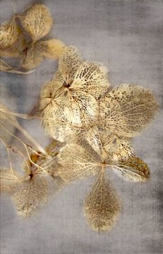 grey and gold Art Feuille D'or, Gold Leaf Art, Deco Nature, Textures Patterns, Rugs On Carpet, Carpets, Color Inspiration, Sculpture, Wall Art