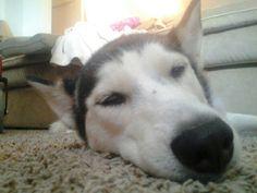 Sleepy :3