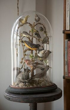 Antique birds under glass