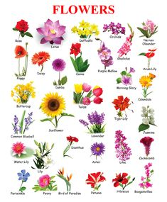 100 Different Types Of Flowers And Their Names