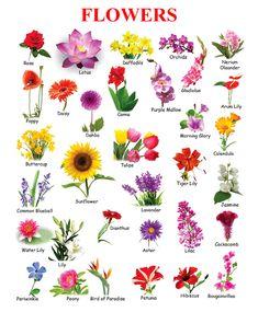 Pin De Daimi Villanueva En Patron De Flores Pinterest Types Of