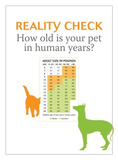 how old is your pet in human years? - dvm360 #petcare