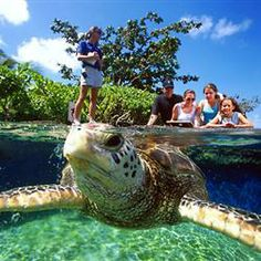Maui Aquarium for two-$50