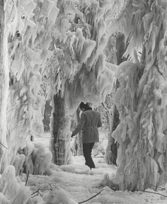 Chicago, Lincoln Park, 1971. Ice-coated trees due to spray from high waves.. Pinned by #CarltonInnMidway - www.carltoninnmidway.com