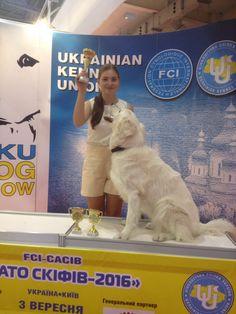 FELICITY VOM URMASTAR -  J.CH UA, Best, BOB   International Dog Show with FCI-CACIB award 02-03.09.2016 Judge PAUL STANTON (SWEDEN):  J.CAC,  Best,  BOB Judge  Игорь Семененко(Украина):  J.CAC