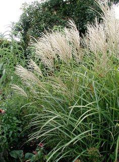 Flowers Canada, Natural Garden, White Gardens, Dream Garden, Landscape Architecture, Flower Decorations, Garden Inspiration, Wild Flowers, Greenery