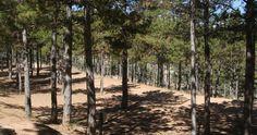 Galería de otras imágenes del Camping las Cabañas