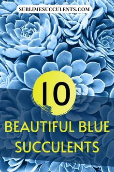 Have you ever seen a blue succulent bouquet? You might have seen one at a wedding or as a centerpiece, but we doubt it! These 10 beautiful blue succulents will inspire you to create interesting centerpieces or unique and aesthetic garden arrangements. Sublime Succulents has shared with you the colorful succulents they like. Take a look at this post to learn more. #bluesucculent #succuelnts #colorfulsucculents #succulentcare Succulent Bouquet, Succulent Care, Colorful Succulents, The More You Know, Types Of Plants, Outdoor Gardens, Vibrant Colors, Centerpieces, Nature