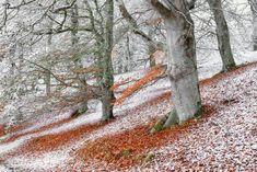 British Wildlife Photography Awards 2018 - In pictures Winner: Wild woods Seasonal Overlap (European Beech), Aviemore, Highlands, Scotland Photography Awards, Photography Projects, Wildlife Photography, Amazing Photography, Animal Photography, Landscape Photography, British Wildlife, Parc National, Photo Checks