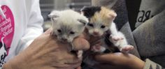 Approximately 7.6 million pets enter animal shelters nationwide every year. Most of these shelters are run by volunteers who work out of the kindness of their hearts, for no monetary gain. #shelters #rescues #rescuepets #helpshelters #kittens #cats #freshpet #petfresh #givingback #bestfriendsanimalsociety