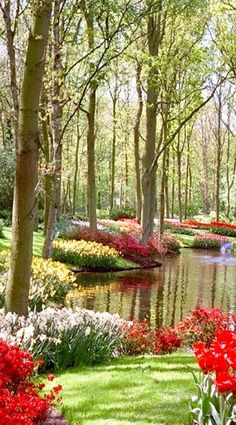 Springtime at  Keukenhof Garden, also known as the Garden of Europe, is one of the world's biggest flower gardens, in Lisse, Netherlands.