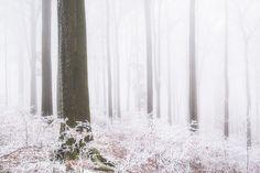 winter forest (Switzerland) by Oliver Wehrli / 500px