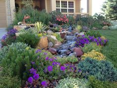 texas xeriscaping ideas | An exuberant border that attracts songbirds and butterflies galore ...