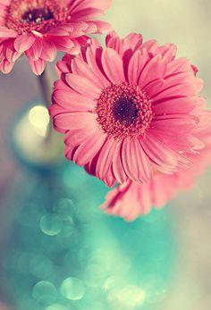 338 Best Flowers Images Planting Flowers Beautiful Flowers