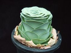 Greenovia dodrentalis by Zusung, via Flickr Greenovia Aurea; Mountain Roses; Aeonium aureum more recently