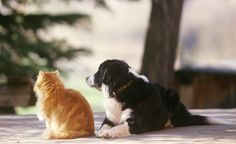 10 Reasons that Dogs are Better than Cats: Are Dogs REALLY Better Than Cats?