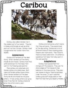 Free two-page informational article about Caribou - suitable for grades 2-4