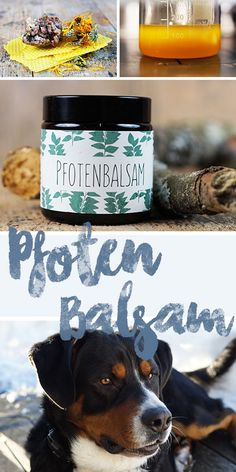 Pfotenbalsam selber machen – so sind die Pfoten unserer Hunde perfekt im Winter … Make paw balm itself – so the paws of our dogs are perfectly protected in winter! Coconut Oil Dogs Skin, Oils For Dogs, Dog Paws, Happy Dogs, Dog Life, I Love Dogs, Animals And Pets, Dog Food Recipes, Dogs And Puppies