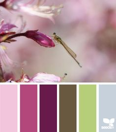 Dragonfly Colours : design seeds