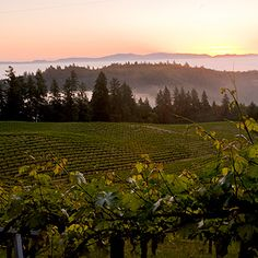 9 Must-See California Wine Country Attractions