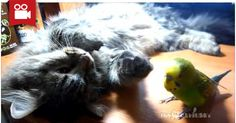 Let Me Sleep! >.<  Watch here: http://meowaum.com/2457-let-me-sleep/