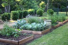 raised beds - little ornamental fences to keep out small animals