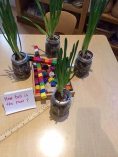 Measuring plants with standard and nonstandard units. Pic from Let the Children Play.