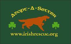Irish Setter Rescue in NJ