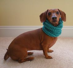 Aw hell.  S/he's cute!  Ravelry: Dog Cowl pattern by Crafty MJ