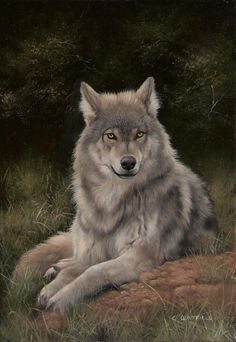 Avoir un chien loup Wolf Photos, Wolf Pictures, Beautiful Wolves, Animals Beautiful, Tier Wolf, Animals And Pets, Cute Animals, Wolf Life, Wolf Artwork