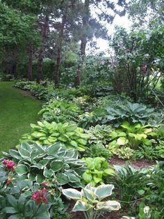 Hosta Garden Ideas 54