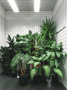 "AKZ Architectura installed a ""jungle"" in the toilets of this vegetarian cafe in Kiev."
