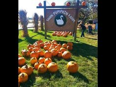 Swan Pumpkin Farm Franksville, Wisconsin from Ivanka's little treasures  Hello everyone... Nice place to visit.  Subscribe to my YouTube Channel and be ready for a video of a new project every week.  Thank you for watching !!!   . . . be cute . . .   Ivanka's little treasures - my online jewelry shop http://www.ivankaslittletreasures.com Etsy: https://www.etsy.com/shop/Ivcas  Black and White Design - my black and white color projects http://ivankas.wix.com/blackandwhitedesign