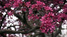 природа, дерево, ветки, весна