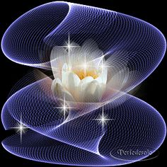 1864 - Hareketli Çiçek Resimleri | Flowers Gifs Flowers Gif, Glitter Flowers, Dark Flowers, Beautiful Flowers, Beautiful Dresses, Beautiful Love Pictures, Beautiful Gif, Minnie Mouse Pictures, Beautiful Nature Wallpaper
