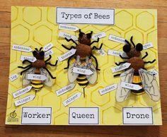 verschillende bijen