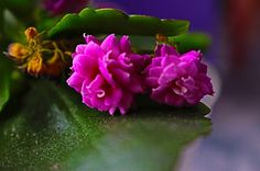 Patchwork Myself: Flower