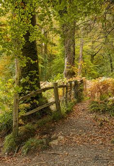 ˚Woodland Wonders, Riverside Path - Dartmoor, England <3