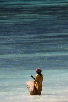 Collecting seaweed @Zanzibar