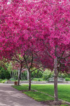 Most Beautiful Gardens, Beautiful Flowers, Beautiful Places, Raspberry Sherbert, Minnesota Landscaping, Victoria Magazine, Public Garden, Secret Places, Winter Snow