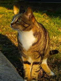 "Precious ""Joey, The Garden Cat""... RIP"