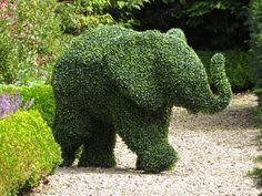 Topiary elephant at /Oldest-Levens-Hall-Garden-in-Cumbria. Topiary Garden, Topiary Trees, Amazing Gardens, Beautiful Gardens, Elephant Art, Elephant Sculpture, Baby Elephant, Formal Gardens, Plant Art