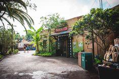 1 Day Itinerary For Walt Disney World's Animal Kingdom Park