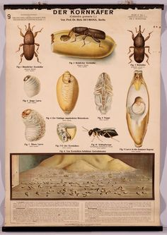 BibliOdyssey: Insect Wall Charts